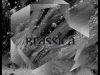 CIV042-BRASSICA-TEMPLE-FORTUNE-EP-SLEEVE-FINAL-PRINT
