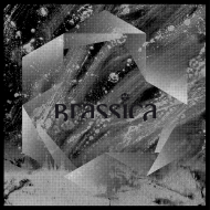 Brassica - Temple Fortune Sleeve